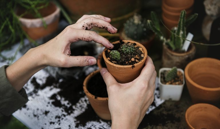De 5 beste gadgets voor je tuin